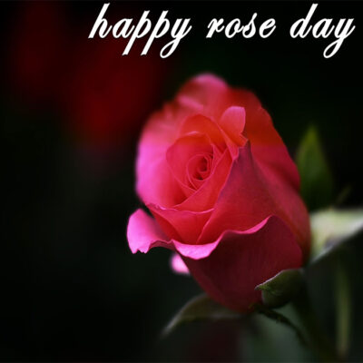 Free Greeting Card For Rose Day